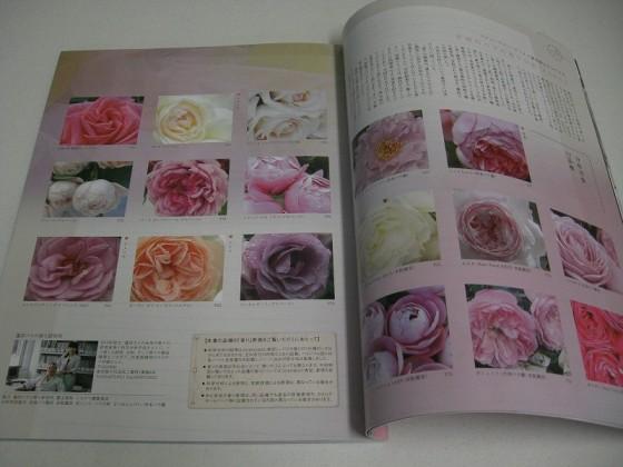 New Roses2011イメージ